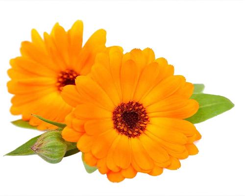 Körömvirág előnyei a bőr számára